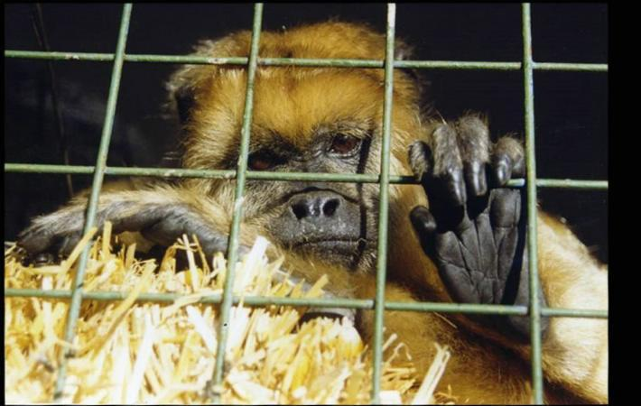 Colombia Circus Animals banned